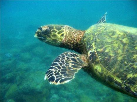 Brasil divulga un inventario de su fauna con 116.000 especies | HISTORIA Y GEOGRAFÍA VIVAS | Scoop.it