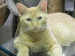 Queens Our City Radio Featured Cat For Adoption – Ryan (IBD) (Malverne) | Queens Our City Radio Featured Cat For Adoption | Scoop.it