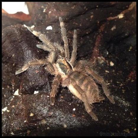Sally-Ann  Spence sur Twitter | Spiders | Scoop.it