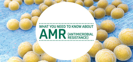 What you need to know about AMR (Antimicrobial resistance) | Food Standards Agency | Media Cultures: Microbiology in the news | Scoop.it