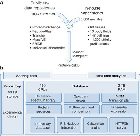 Mass-spectrometry-based draft of the human proteome : Nature : Nature Publishing Group | Systems biology and bioinformatics | Scoop.it