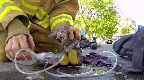 Helmet Camera Captures Firefighter Bringing A Tiny Kitten Back To Life | Feline Health and News - manhattancats.com | Scoop.it