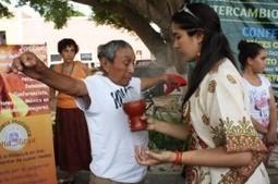 Revaloran el maíz maya en 1a Feria de Semillas Criollas en Saki'-Valladolid | RECURSOS NATURALES | Scoop.it