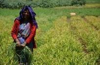 Quelles avancées contre la faim en 2013 ? | Economie Responsable et Consommation Collaborative | Scoop.it