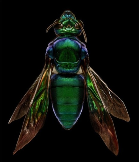 Super high-resolution photos of tiny insects | Dr. Goulu | Scoop.it