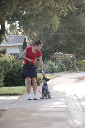 My Dog Knows Some Walking Exercises: How to Incorporate Them Into a Walk | Education canine, comportement canin | Scoop.it