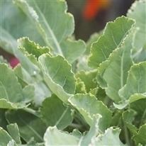 Créer un potager de légumes perpétuels - FERME DE SAINTE MARTHE | Jardin Potager Biologique | Scoop.it