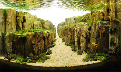 The Incredible Underwater Art of Competitve Aquascaping | Colossal | enjoy yourself | Scoop.it