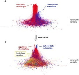 PLOS Computational Biology: Heat Shock Partially Dissociates the Overlapping Modules of the Yeast Protein-Protein Interaction Network: A Systems Level Model of Adaptation | Systems biology and bioinformatics | Scoop.it