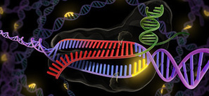 Scientists urge caution in using new CRISPR technology to treat human genetic ... - UC Berkeley | CLOVER ENTERPRISES ''THE ENTERTAINMENT OF CHOICE'' | Scoop.it