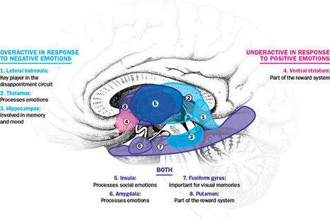 Depression Tweaks the Brain's Disappointment Circuit | Social Neuroscience Advances | Scoop.it