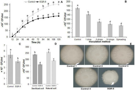 Response of tomato wilt pathogen Ralstonia solanacearum to the volatile organic compounds produced by a biocontrol strain Bacillus amyloliquefaciens SQR-9 | Plant-Microbe Symbiosis | Scoop.it