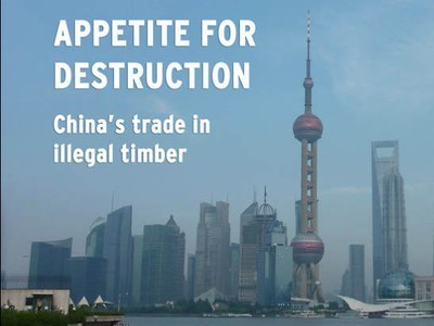 China Now World's Largest Importer of Illegal Timber (Video) | Recherche d'actu Chine | Scoop.it