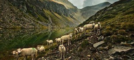 Schweiz: Knappe Zustimmung für zweiten Nationalpark in Graubünden | Tourismus | Scoop.it