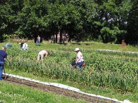 Michigan State proposes 100-acre, $100-million urban-farming research center in Detroit | Neo Agrarian Society and Urban Forestry | Scoop.it