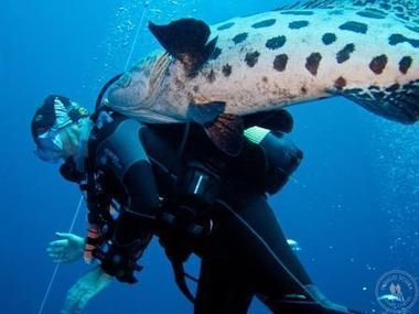 Secrets Revealed: How to take really great photos of divers | Indigo Scuba | Indigo Scuba | Scoop.it