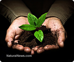 Feeding the soil: An introduction to the no-till gardening method | Healing our planet | Scoop.it