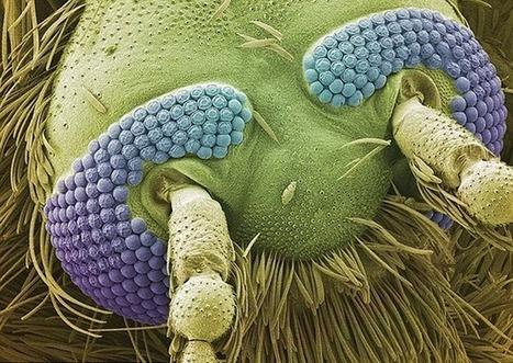 Découverte des composés chimiques qui rendent inopérant le détecteur de vertébré du moustique | EntomoNews | Scoop.it