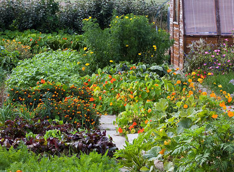 8 plantes de bonne compagnie à associer avec d'autres | Potager & Jardin | Scoop.it