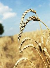 Sensibilidad al gluten Enfermedades Digestivas - Madrid. Info general | Gluten free! | Scoop.it