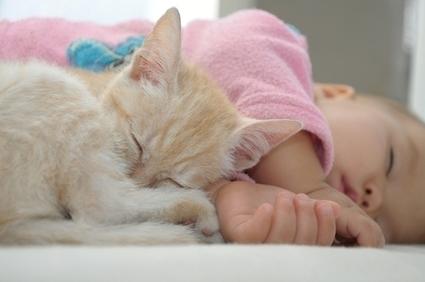 Un chat sauve la vie d'un bébé abandonné en Russie | CaniCatNews-actualité | Scoop.it