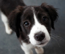 Housetraining Your Dog or Puppy : The Humane Society of the United States   Everyone Should Own A Pet   Scoop.it