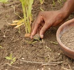 Innover pour la petite agriculture du Sud, un contrat social nécessaire | Smart agriculture & ruralité : | Scoop.it
