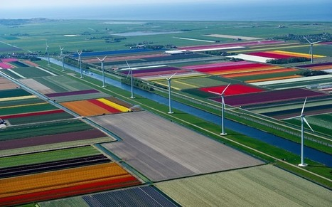 Aerial photographs of tulip fields in the Netherlands   The Miracle of Fall   Scoop.it