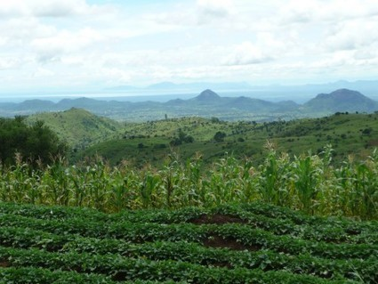 Smallholder agroforestry plots may boost tree conservation | Climate Smart Agriculture | Scoop.it