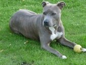 Les catégories de chiens - Blog animaux zoomalia.com | PETS & ANIMAUX | Scoop.it