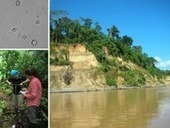 What Did the Amazon Look Like Before European Contact? | Agricultural Biodiversity | Scoop.it