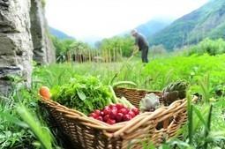 Culture Jardin - Un blog de jardin bio pour tous ! | les sites et blogs à suivre | Scoop.it