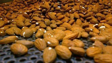 The health benefits of almonds - Fox News | Almond Oil | Scoop.it