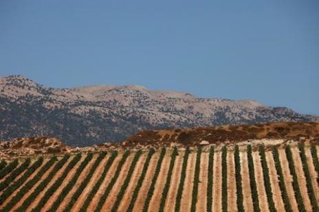 Retour sur l'histoire des vins libanais à l'occasion de la journée du Liban | My Bettane+Desseauve | Charliban Lebnen | Scoop.it