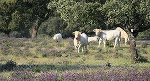 Les exploitations d'élevage herbivore économes en intrants (ou autonomes) : quelles sont leurs caractéristiques ? Comment accompagner leur développement ? | Alim'agri | Veille Scientifique Agroalimentaire - Agronomie | Scoop.it