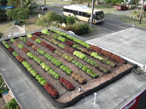 Rooftop Farms Next Logical Step in 'Green' Building | Sustainable agriculture | Scoop.it