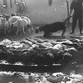 What happens in Beirut Slaughterhouse? | Nature Animals humankind | Scoop.it