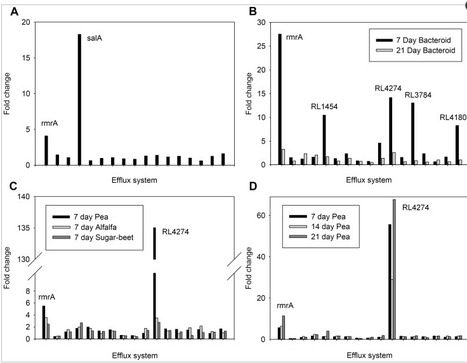 Characterisation of SalRAB a Salicylic Acid Inducible Positively Regulated Efflux System of R. leguminosarum bv viciae 3841 | Genetics of agriculturally significant micro organisms. | Scoop.it
