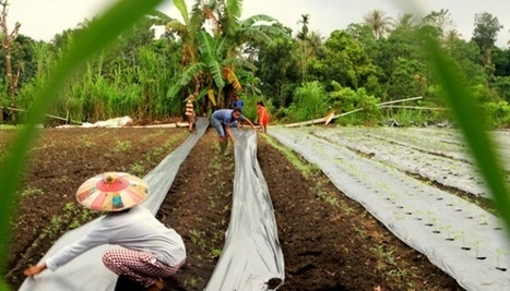 Indonesia Falls Behind Vietnam in Pepper Production. | F&FNews | Scoop.it