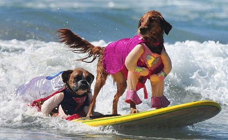Photos: California's dogs go surfing at the annual 5th Surf Dog ... | Surf | Scoop.it