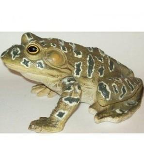 9 inch Large Grunting Rubber Bullfrog Amphibian Replica   Online Store   Scoop.it