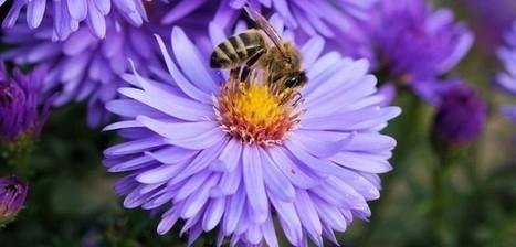 Se soigner grâce aux abeilles | Chronique d'un pays où il ne se passe rien... ou presque ! | Scoop.it