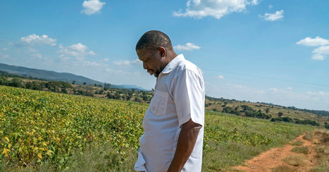 'No One Is Safe': Zimbabwe Threatens to Seize Farms of Party Defectors | Convincingly Contrarian Crumbs | Scoop.it