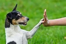 Research Suggests: Left-Pawed Dogs Show More Aggression Toward Strangers | Dog Traning | Scoop.it