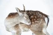 Le renard glouton de la centrale de Tchernobyl - National Geographic   Zoologie et Ethologie   Scoop.it