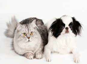 Despite Economic Crisis, Egypt's Pet Food Imports Hiked To $500 Mln In 2012   Égypt-actus   Scoop.it