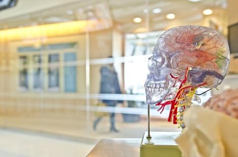 5 Dingen die je moet weten over de hersenen en leren - Vernieuwenderwijs | Digischool groep5en6 | Scoop.it
