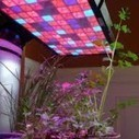 Different types of LED grow light and its usag | Importance of Hps lights kits | Scoop.it