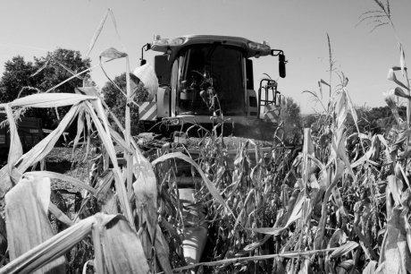 On redoute la colère des ventres vides | Agriculture en Dordogne | Scoop.it