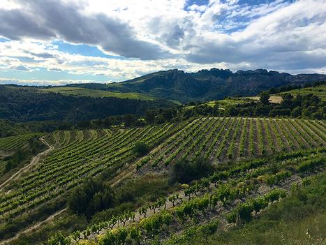 Créer du lien entre digital et vin | Le Vin et + encore | Scoop.it